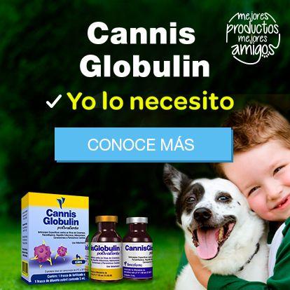 Banner-m-Cannis-Globulin