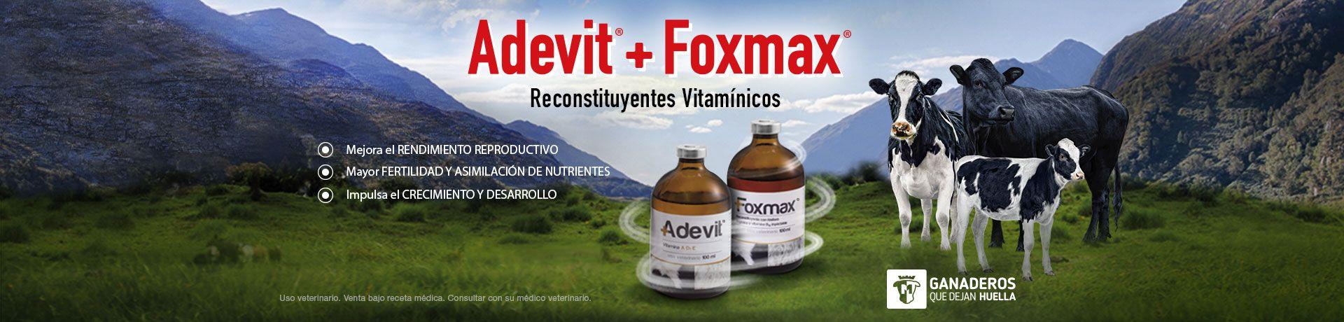 Banner-Adevit_Foxmax